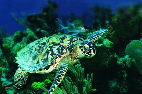 青岛海底世界 - 没看过海底世界 别说你到过青岛